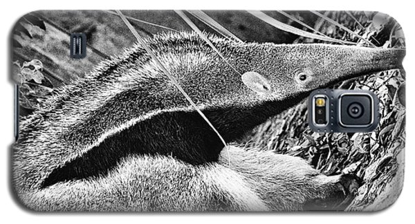 Ant Eater Galaxy S5 Case