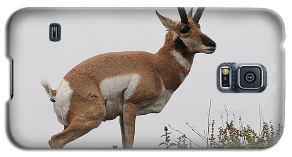 Antelope Critiques Photography Galaxy S5 Case