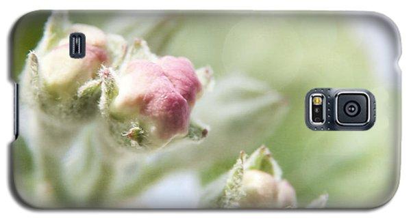 Apple Tree Blossom Galaxy S5 Case by Agnieszka Kubica