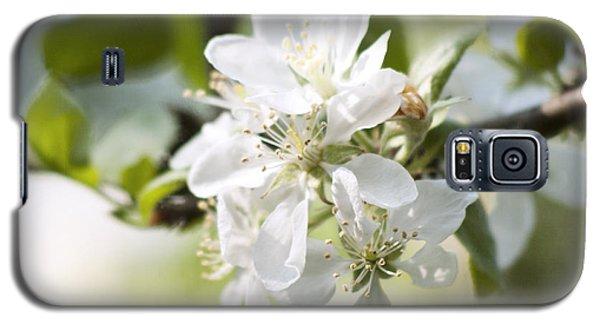 Apple Tree Flowers Galaxy S5 Case by Agnieszka Kubica