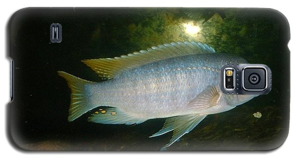 Galaxy S5 Case featuring the photograph Aquarium Life by Bonfire Photography