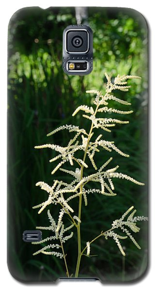Aruncus Galaxy S5 Case