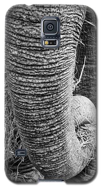Asian Elephant Trunk Galaxy S5 Case