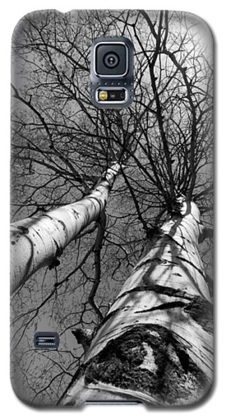 Aspen Glow Galaxy S5 Case by Colleen Coccia