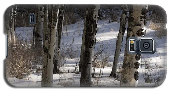 Galaxy S5 Case featuring the photograph Aspen Grove by Angelique Olin