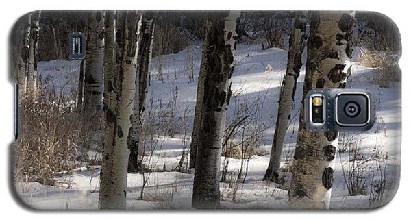 Aspen Grove Galaxy S5 Case by Angelique Olin