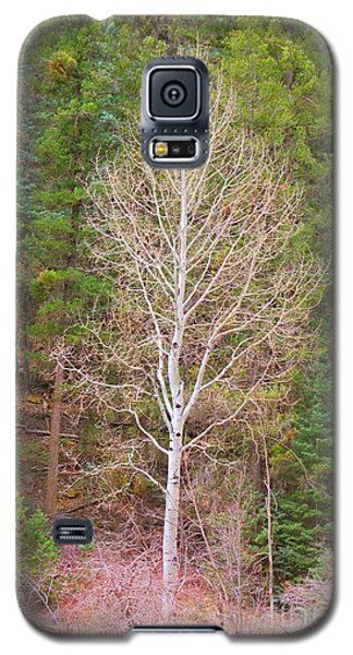 Aspen Tree Forest Road 249 Galaxy S5 Case