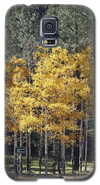 Aspens In Color Galaxy S5 Case