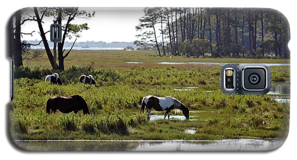 Assateague Wild Horses Feeding Galaxy S5 Case