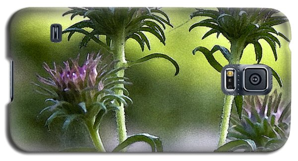 Galaxy S5 Case featuring the photograph Asters by Michael Friedman