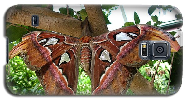 Galaxy S5 Case featuring the photograph Atlas Moth by Wendy McKennon