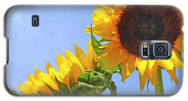 August Sunshine Galaxy S5 Case by Traci Cottingham