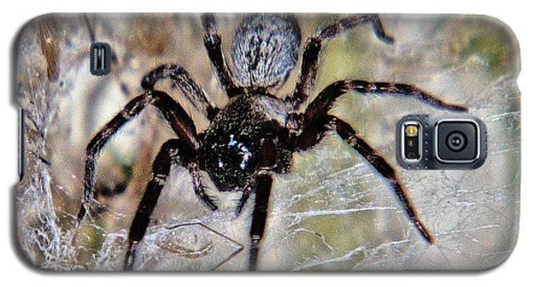 Australian Spider Badumna Longinqua Galaxy S5 Case