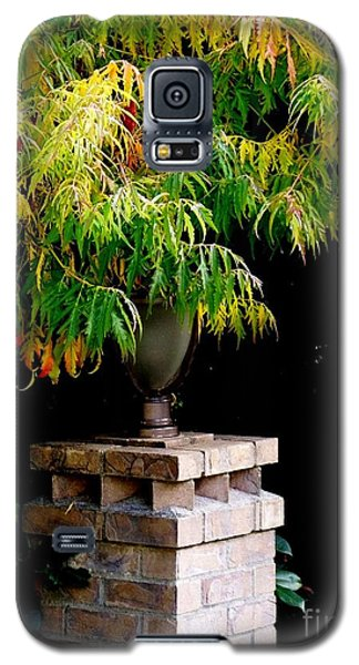 Galaxy S5 Case featuring the photograph Autumn 2 by Tanya  Searcy
