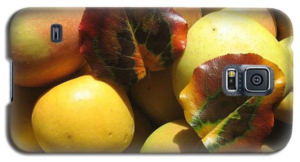 Autumn Apple Afternoon Galaxy S5 Case