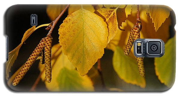 Galaxy S5 Case featuring the photograph Autumn Birch In Southern Oregon by Mick Anderson