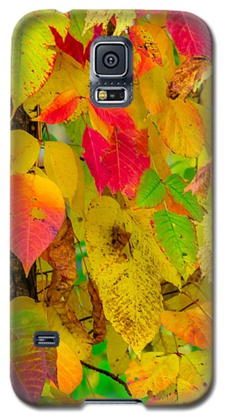 Galaxy S5 Case featuring the photograph Autumn by Brian Stevens