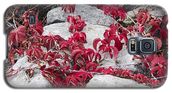 Autumn Color Is Red Galaxy S5 Case