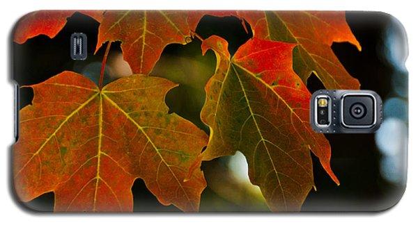 Autumn Glory Galaxy S5 Case by Cheryl Baxter