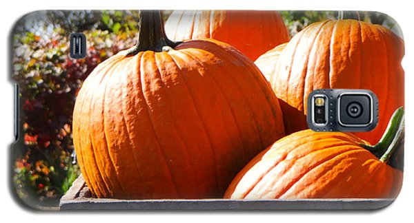 Autumn Harvest Galaxy S5 Case by Julia Wilcox