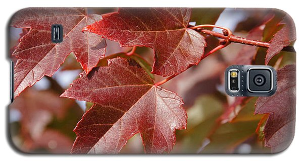 Galaxy S5 Case featuring the photograph Autumn In My Back Yard by Mick Anderson