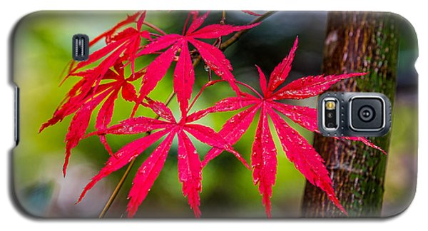 Galaxy S5 Case featuring the photograph Autumn Japanese Maple by Ken Stanback
