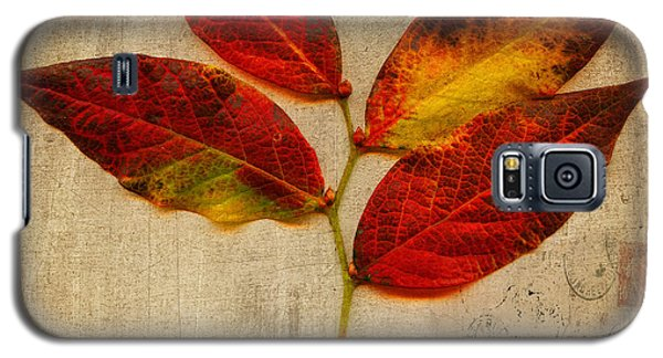 Autumn Leaf With Texture Galaxy S5 Case