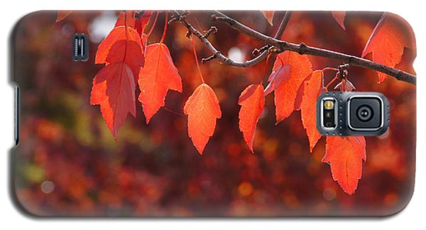 Galaxy S5 Case featuring the photograph Autumn Leaves In Medford by Mick Anderson