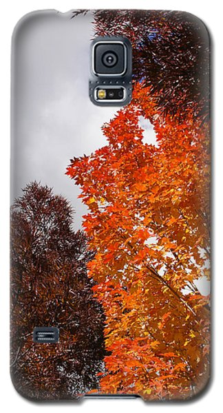 Galaxy S5 Case featuring the photograph Autumn Looking Up by Mick Anderson