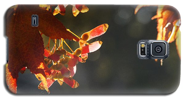 Galaxy S5 Case featuring the photograph Autumn Maple by Mick Anderson