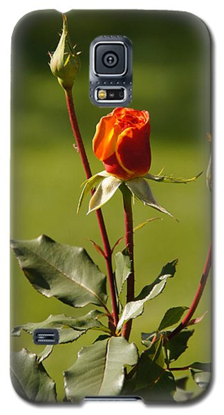 Galaxy S5 Case featuring the photograph Autumn Rose by Mick Anderson