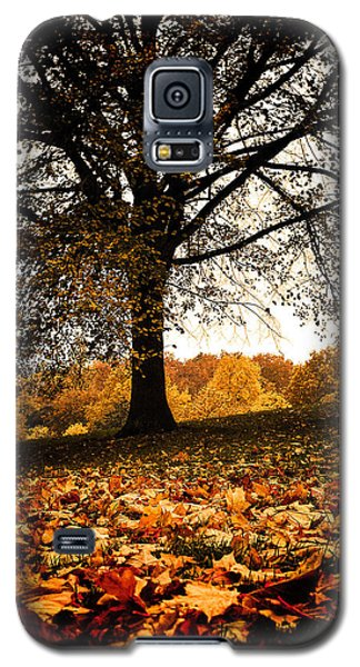 Autumnal Park Galaxy S5 Case