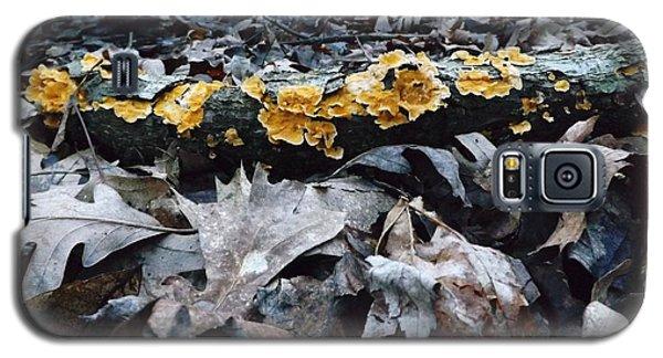Autumns Art 3 Galaxy S5 Case by Gerald Strine