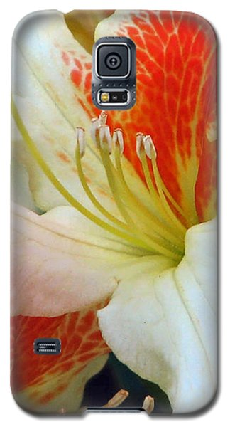 Galaxy S5 Case featuring the photograph Azaleodendron Glory Of Littleworth by Chris Anderson