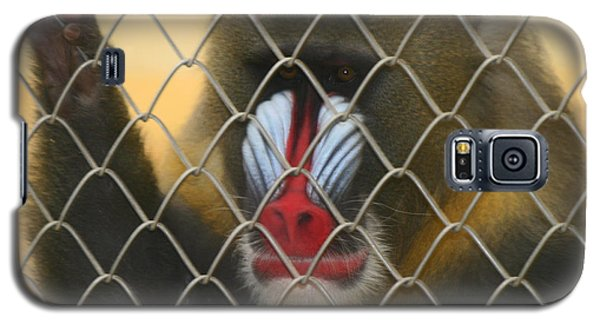 Galaxy S5 Case featuring the photograph Baboon Behind Bars by Kym Backland