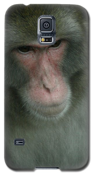 Baboon Galaxy S5 Case by Cindy Haggerty