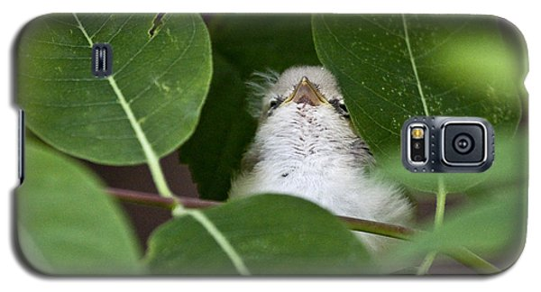 Baby Bird Peeping In The Bushes Galaxy S5 Case by Jeannette Hunt