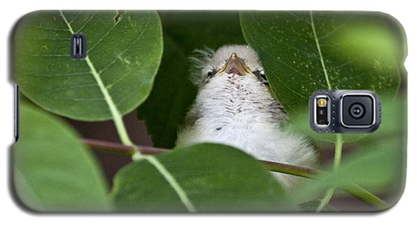 Baby Bird Peeping In The Bushes Galaxy S5 Case