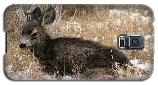 Galaxy S5 Case featuring the photograph Baby Deer At Rest by Nola Lee Kelsey