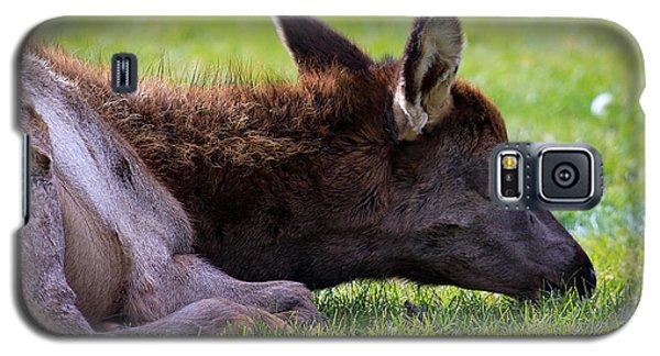 Baby Elk Galaxy S5 Case by Steve McKinzie