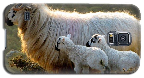 Baby-lambs Galaxy S5 Case by Barbara Walsh