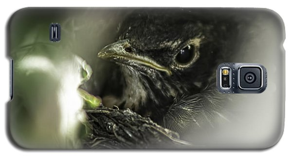 Galaxy S5 Case featuring the photograph Baby Robin by Tom Gort