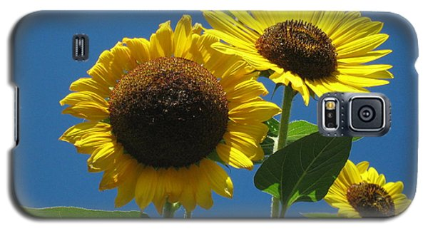 Galaxy S5 Case featuring the photograph Back Bay Sunflowers by Bruce Carpenter