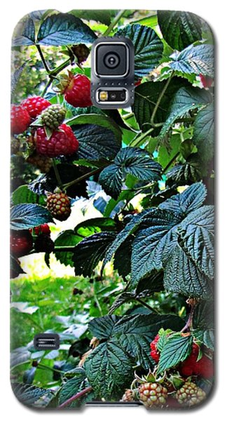 Backyard Berries Galaxy S5 Case