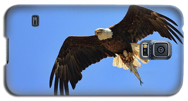 Bald Eagle Catch Galaxy S5 Case