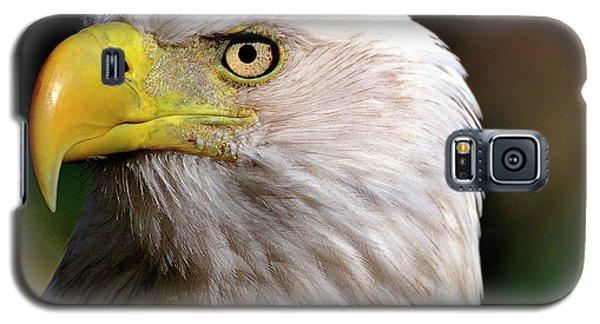 Bald Eagle Close Up Galaxy S5 Case