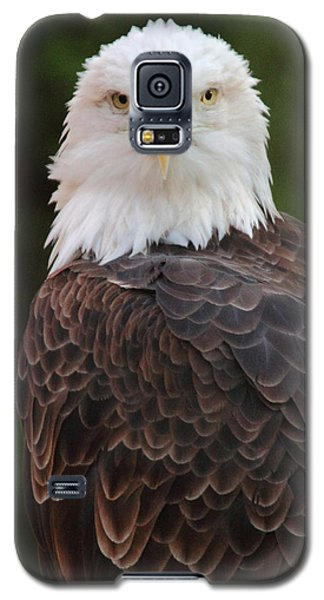 Galaxy S5 Case featuring the photograph Bald Eagle by Coby Cooper