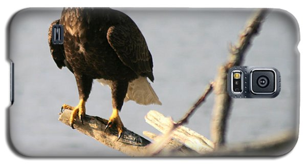 Galaxy S5 Case featuring the photograph Bald Eagle On Driftwood by Kym Backland