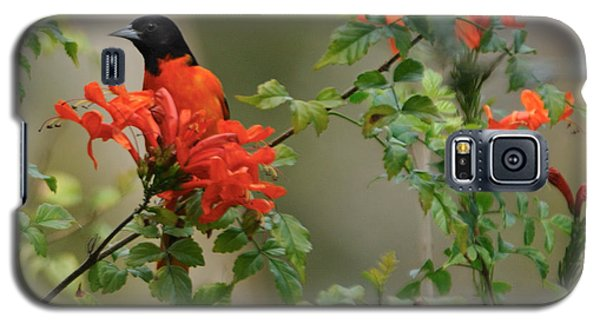 Baltimore Oriole In Orange Honeysuckle Galaxy S5 Case