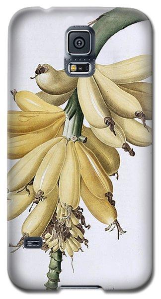 Banana Galaxy S5 Case
